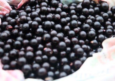 Jabuticaba – Saberes Tradicionais de Milho Verde – MG